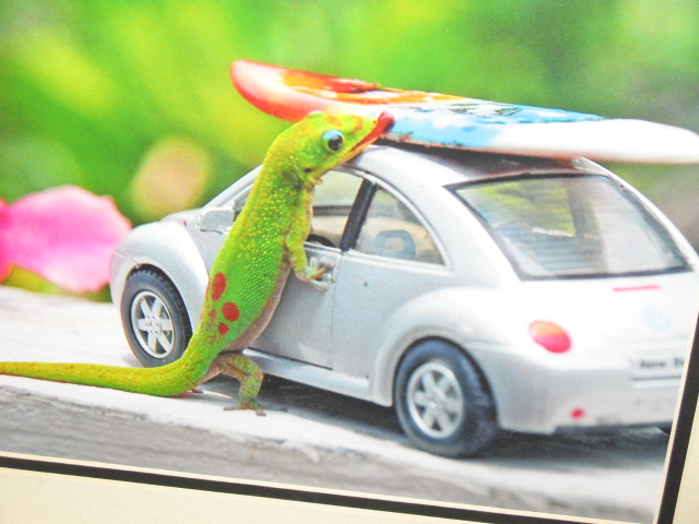 The gecko is a ham!